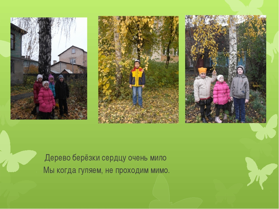 Дерево берёзки сердцу очень мило Мы когда гуляем, не проходим мимо.