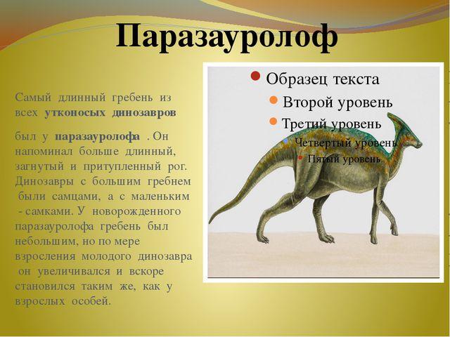 Самый длинный гребень из всех утконосых динозавров был у паразауролофа . Он н...