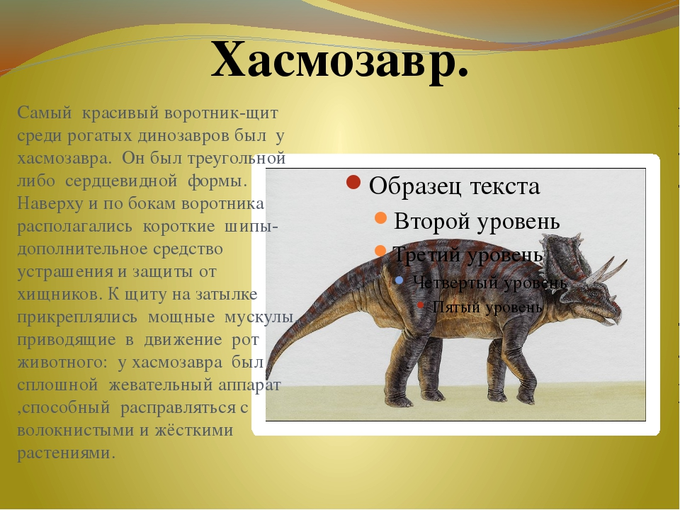 Самый красивый воротник-щит среди рогатых динозавров был у хасмозавра. Он был...