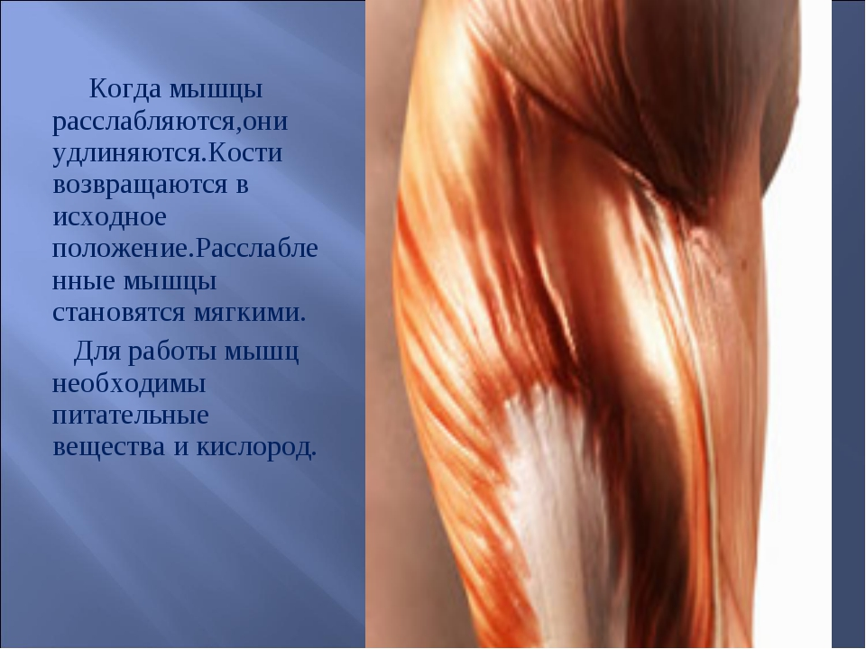 Когда мышцы расслабляются,они удлиняются.Кости возвращаются в исходное полож...