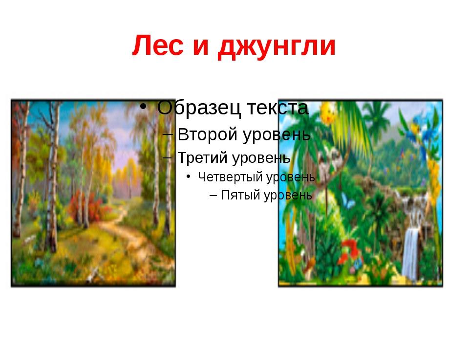 Лес и джунгли