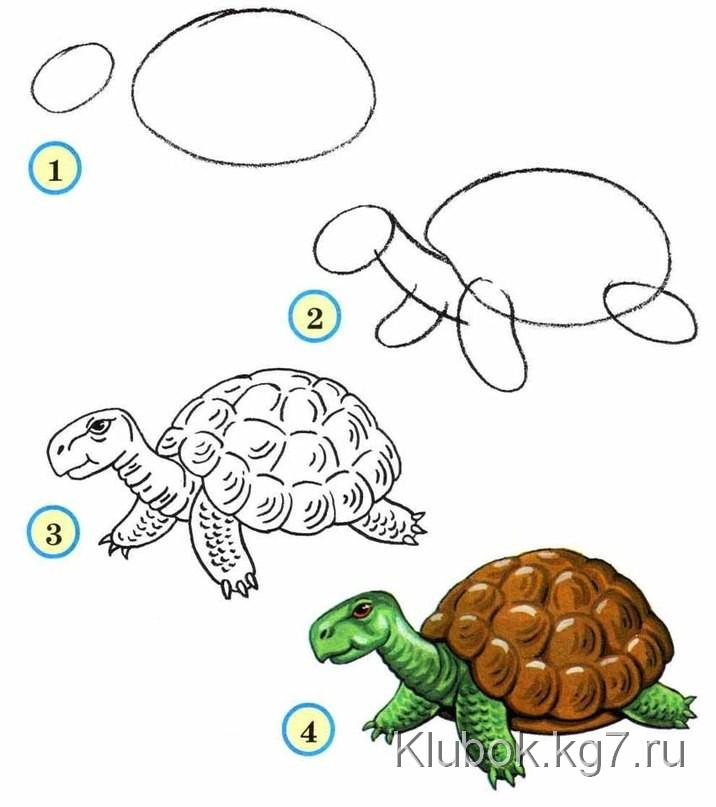 http://www.fabartdiy.com/wp-content/uploads/2015/01/Draw-wildlife-animals-turtle.jpg