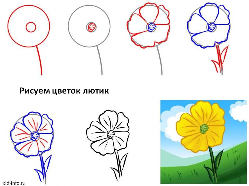 http://kid-info.ru/wp-content/uploads/2012/03/risuem-cvetok-lutik.jpg
