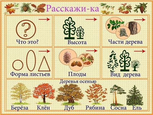 http://i036.radikal.ru/1101/c7/8e030c1df544.jpg