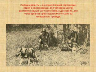 Собаки-связисты – в сложной боевой обстановке, порой в непроходимых для челов