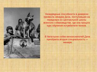 Незаурядные способности в диверсии проявила овчарка Дина, поступившая на пере
