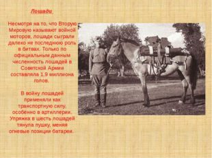 Лошади Несмотря на то, что Вторую Мировую называют войной моторов, лошади сыг