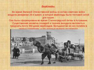 Верблюды. Во время Великой Отечественной войны в состав советских войск входи