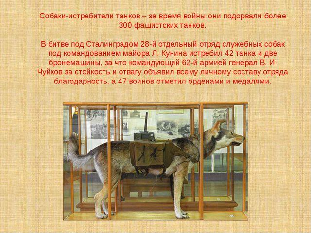 Собаки-истребители танков – за время войны они подорвали более 300 фашистски...
