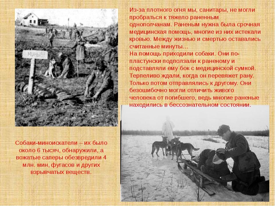 Собаки-миноискатели – их было около 6 тысяч, обнаружили, а вожатые саперы обе...