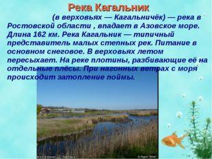 Река Кагальник Кагальни́к (в верховьях — Кагальничёк) — река в Ростовской обл