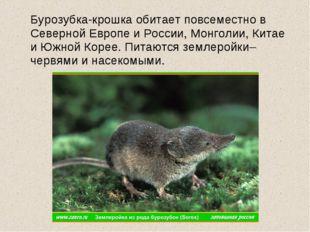 Бурозубка-крошка обитает повсеместно в Северной Европе и России, Монголии, К