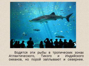 Водятся эти рыбы в тропических зонах Атлантического, Тихого и Индийского ок
