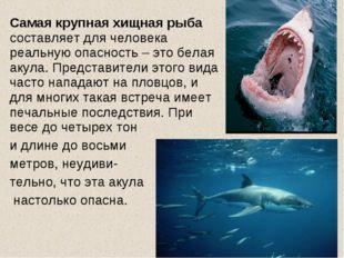 Самая крупная хищная рыба составляет для человека реальную опасность – это б