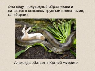 Они ведут полуводный образ жизни и питаются в основном крупными животными, к