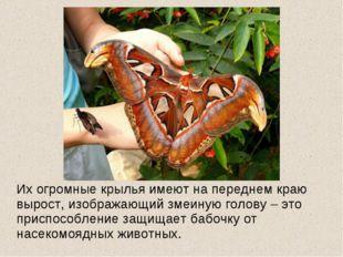 Их огромные крылья имеют на переднем краю вырост, изображающий змеиную голов