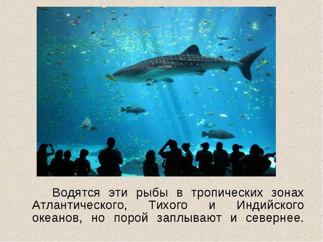 Водятся эти рыбы в тропических зонах Атлантического, Тихого и Индийского ок...
