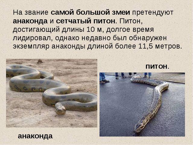 На звание самой большой змеи претендуют анаконда и сетчатый питон. Питон, до...