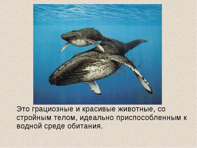 Это грациозные и красивые животные, со стройным телом, идеально приспособлен...