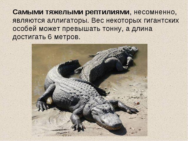 Самыми тяжелыми рептилиями, несомненно, являются аллигаторы. Вес некоторых г...