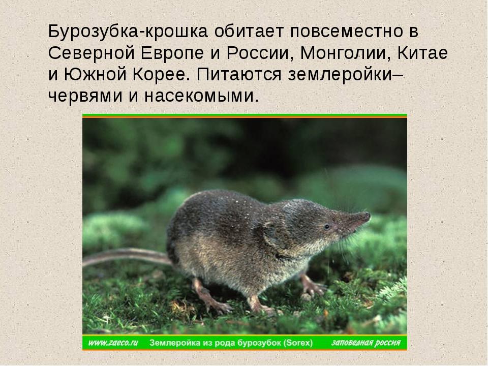 Бурозубка-крошка обитает повсеместно в Северной Европе и России, Монголии, К...