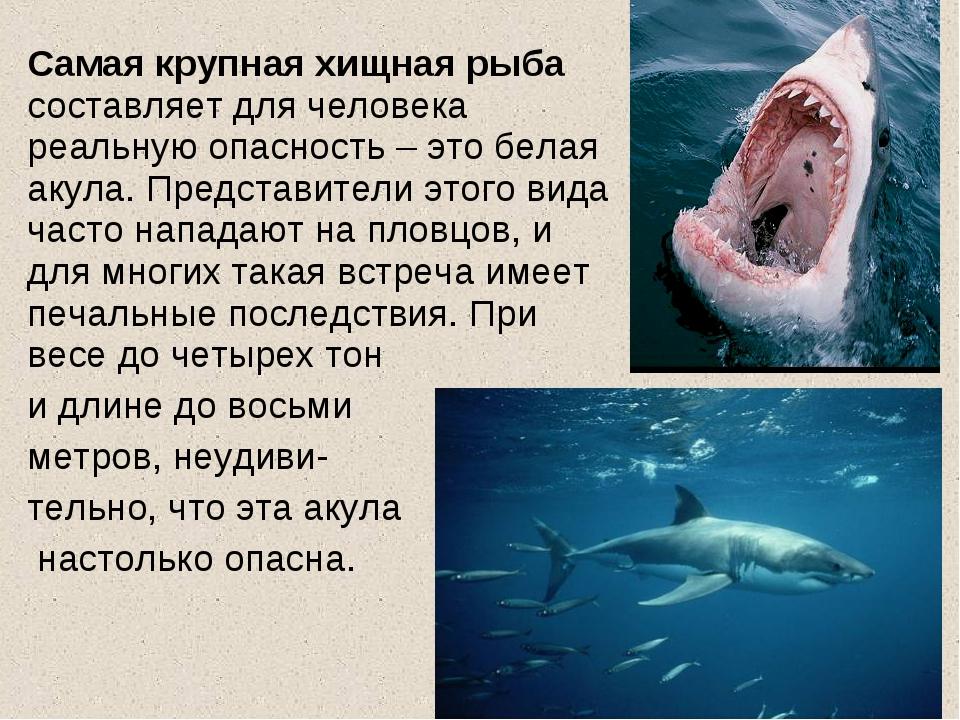 Самая крупная хищная рыба составляет для человека реальную опасность – это б...