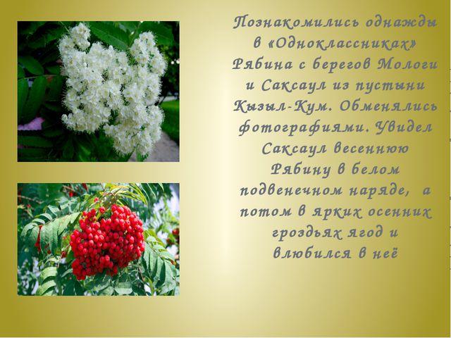 Познакомились однажды в «Одноклассниках» Рябина с берегов Мологи и Саксаул из...