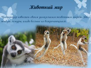Животный мир Мадагаскар известен своим уникальным животным миром. Здесь живут