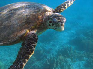 Встречаются крупные морские черепахи.