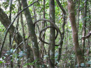 Растительный мир Пахотные земли занимают 4% территории, луга и пастбища - 58%