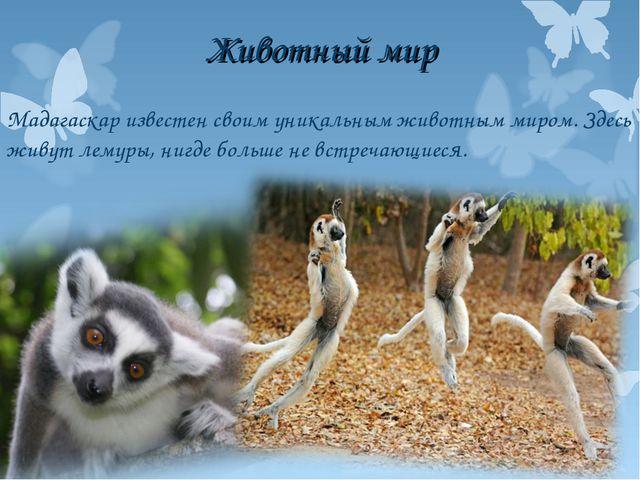 Животный мир Мадагаскар известен своим уникальным животным миром. Здесь живут...