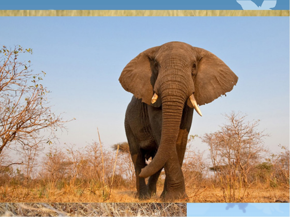 На острове много диких животных - львов, антилоп, слонов.