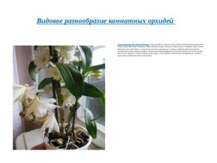 Орхидея Дендробиум(Orchidaceae Dendrobium)– один из наиболее многочисленны
