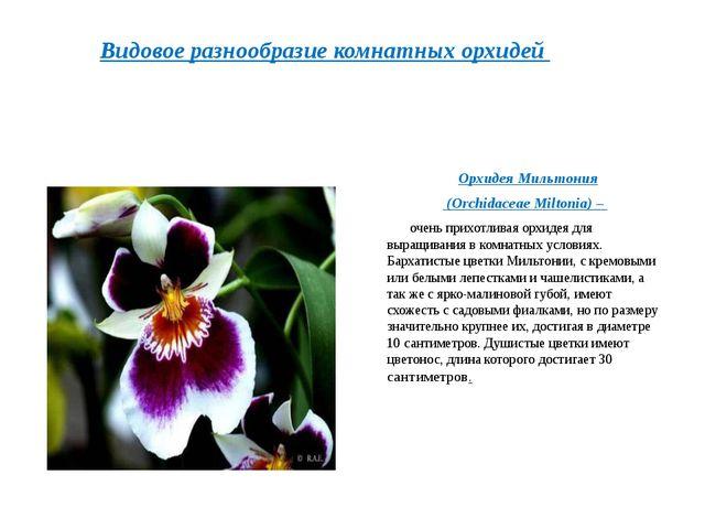Орхидея Мильтония (Orchidaceae Miltonia)– очень прихотливая орхидея для вы...