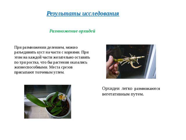 Результаты исследования Размножение орхидей Орхидеи легко размножаются вегета...