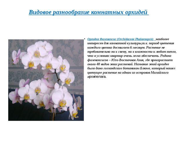 Орхидея Фаленопсис(Orchidaceae Phalaenopsis) наиболее интересен для комна...