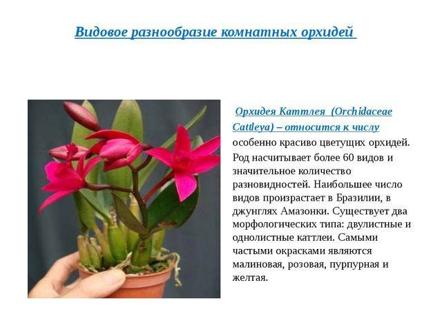 Орхидея Каттлея (Orchidaceae Cattleya)– относится к числу особенно красиво...