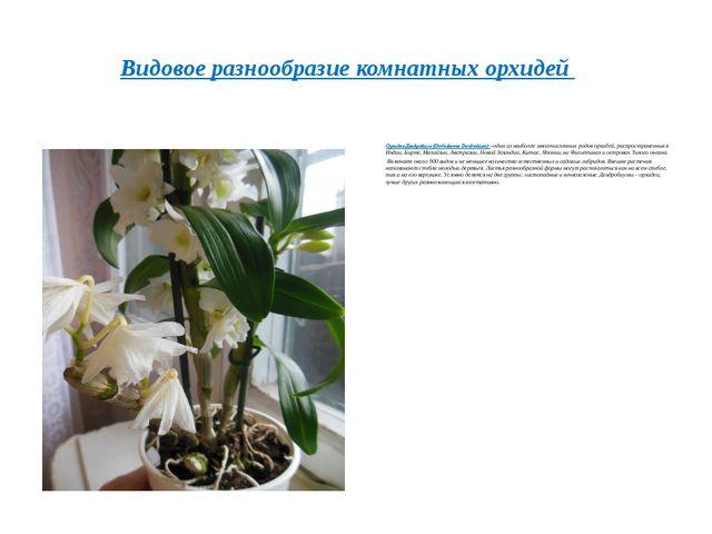 Орхидея Дендробиум(Orchidaceae Dendrobium)– один из наиболее многочисленны...