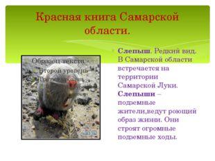 Красная книга Самарской области. Слепыш. Редкий вид. В Самарской области встр