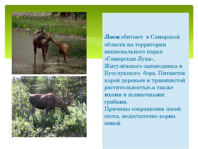 Лосиобитают в Самарской области на территории национального парка «Самарская...