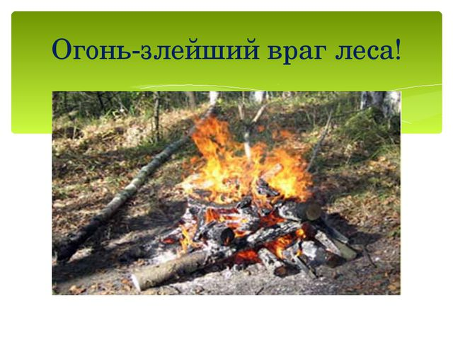 Огонь-злейший враг леса!