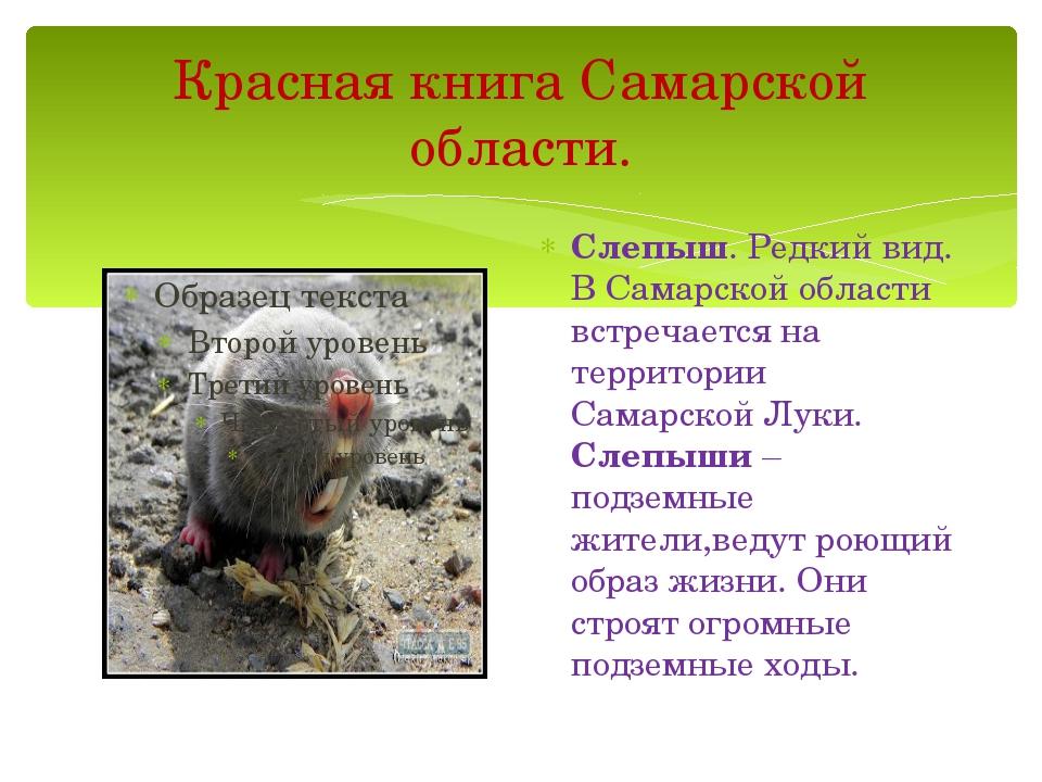 Красная книга Самарской области. Слепыш. Редкий вид. В Самарской области встр...