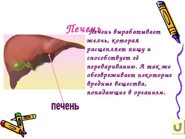 Печень Печень вырабатывает желчь, которая расщепляет пищу и способствует её п...