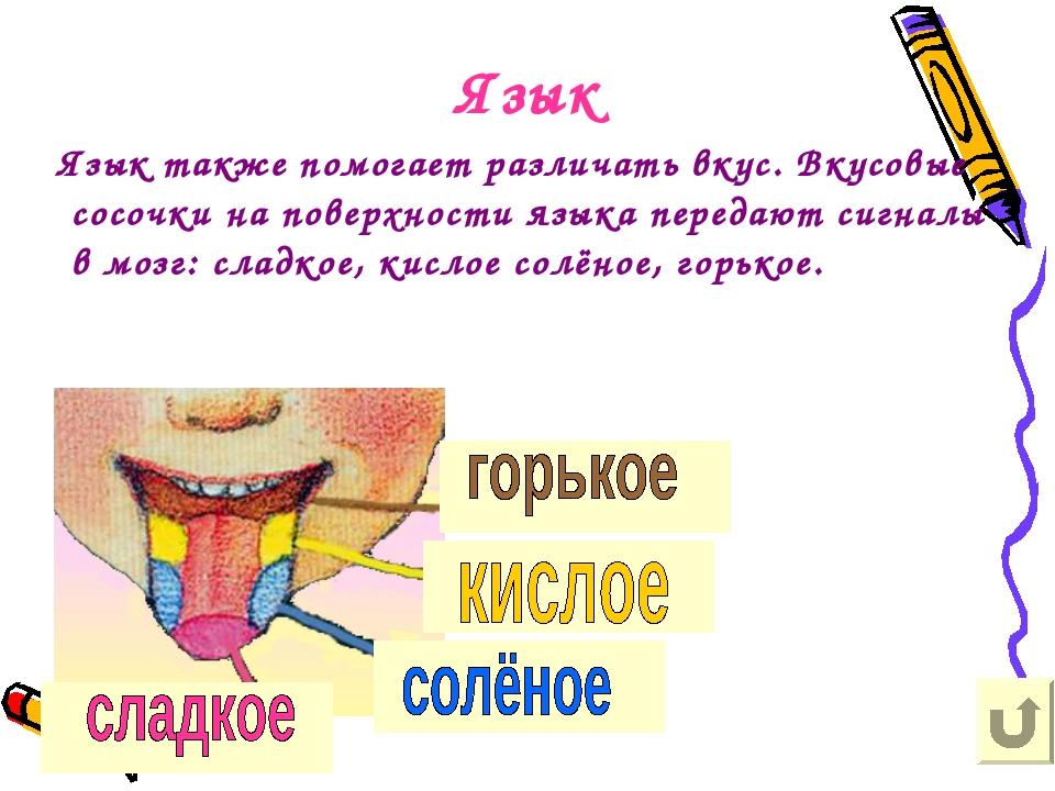 Язык Язык также помогает различать вкус. Вкусовые сосочки на поверхности язык...