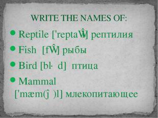 Reptile ['reptaɪl] рептилия Fish [fɪʃ]рыбы Bird [bɜːd] птица Mammal ['mæm(ə