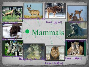 Mammals Bear [bɛə] Wolf [wulf] Antelope['æntɪləup] Goat [gəut] Gnu [nuː]