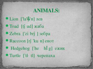 Lion ['laɪən]лев Toad [təud]жаба Zebra ['ziːbrə] зебра Raccoon [rə'kuːn] ен