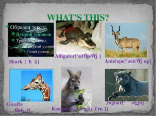 WHAT'S THIS? Kangaroo[ˌkæŋg(ə)'ruː] Alligator['ælɪgeɪtə] Giraffe [ʤɪ'rɑːf]