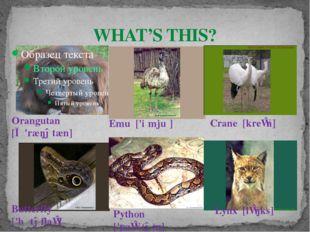 WHAT'S THIS? Orangutan [ɔː'ræŋətæn] Emu ['iːmjuː] Lynx [lɪŋks] Butterfly ['