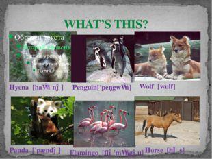 WHAT'S THIS? Hyena [haɪ'iːnə] Penguin['peŋgwɪn] Panda ['pændə] Horse [hɔːs]